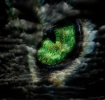 Cats Eye Storm by MLB